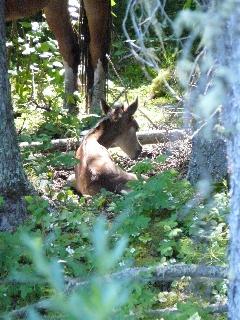 Bragg creek wild foal