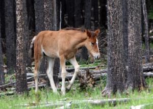 2010 Foal