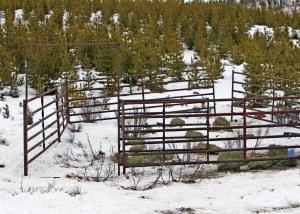 Baited Horse capture pen