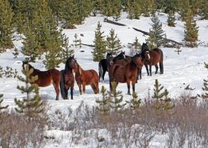 Hombre's Herd