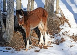 Orphaned foal?