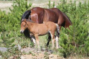 July foal