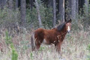 Fall foal