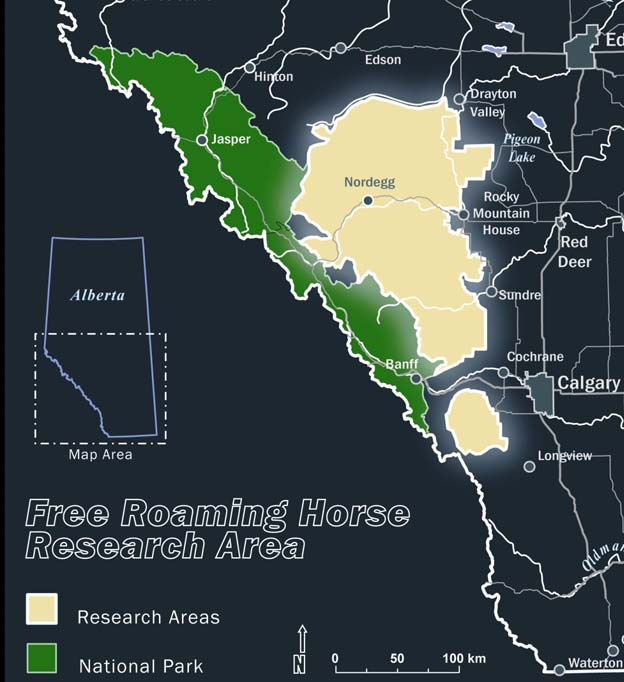 Wild Horses Map Canada Your Wild Horses – The Wild Horses of Alberta Society