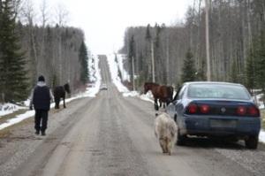 The herding has begun