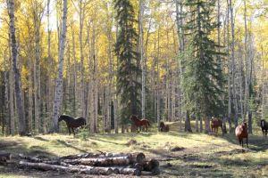 The resident herd