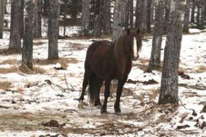 Porter our resident stallion