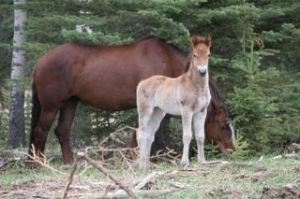 "Our little foal ""April"""