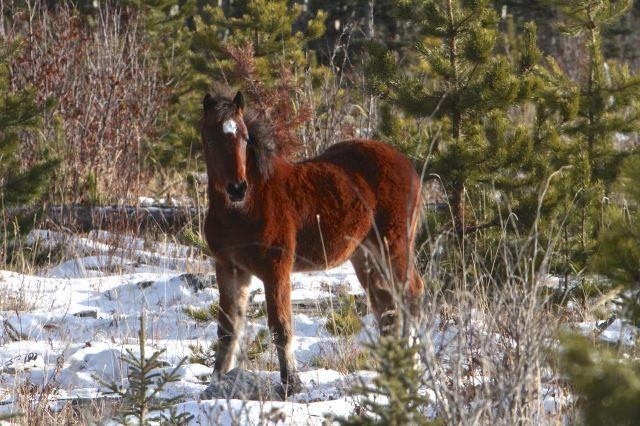 A wildie colt