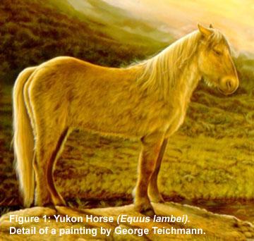 Yukon Horse