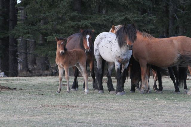 Magnificent stallion and family