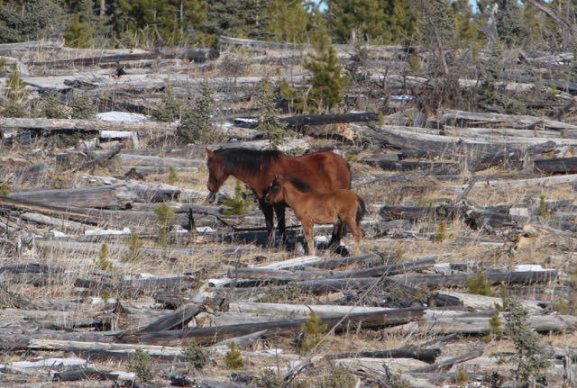 Late foal